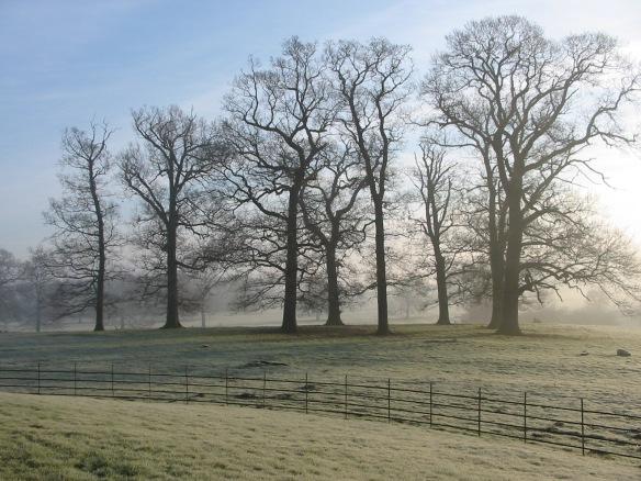gate-burton-frost