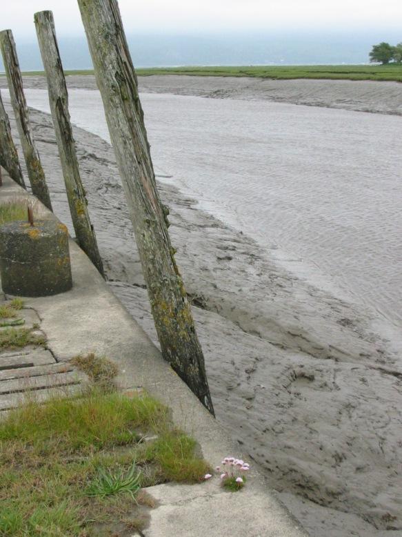 wigtown estuary